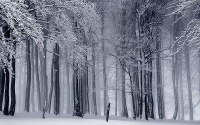Чем заняться в Кирове зимой?